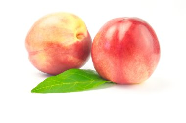 Two nectarines with green leaves on white background