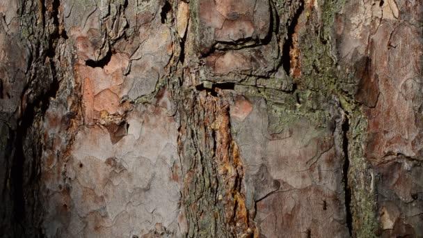 Mravenci v lese pěšky podél kůra