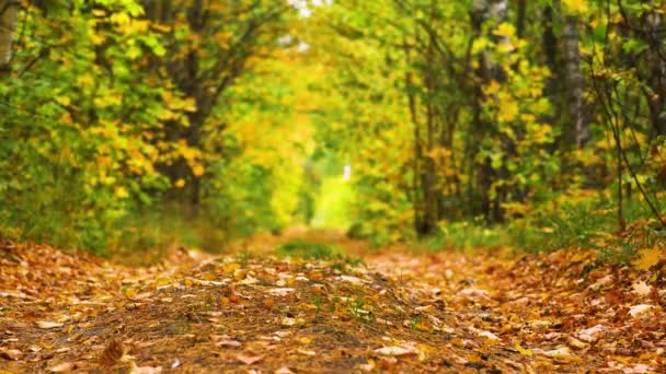 Pathway through the autumn forest. Falling leaves