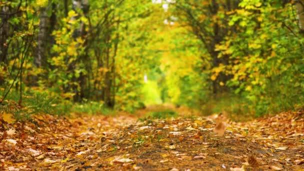 Podzimní listí padá v lese