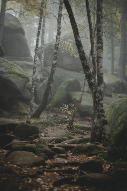 Trail through a mysterious dark old forest in fog. Autumn mornin