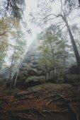 Fák a titokzatos sötét régi erdők a ködben. Őszi reggel. Tisztességes