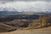 Incredibile vista bianca come la neve alta montagne e alberi di autunno