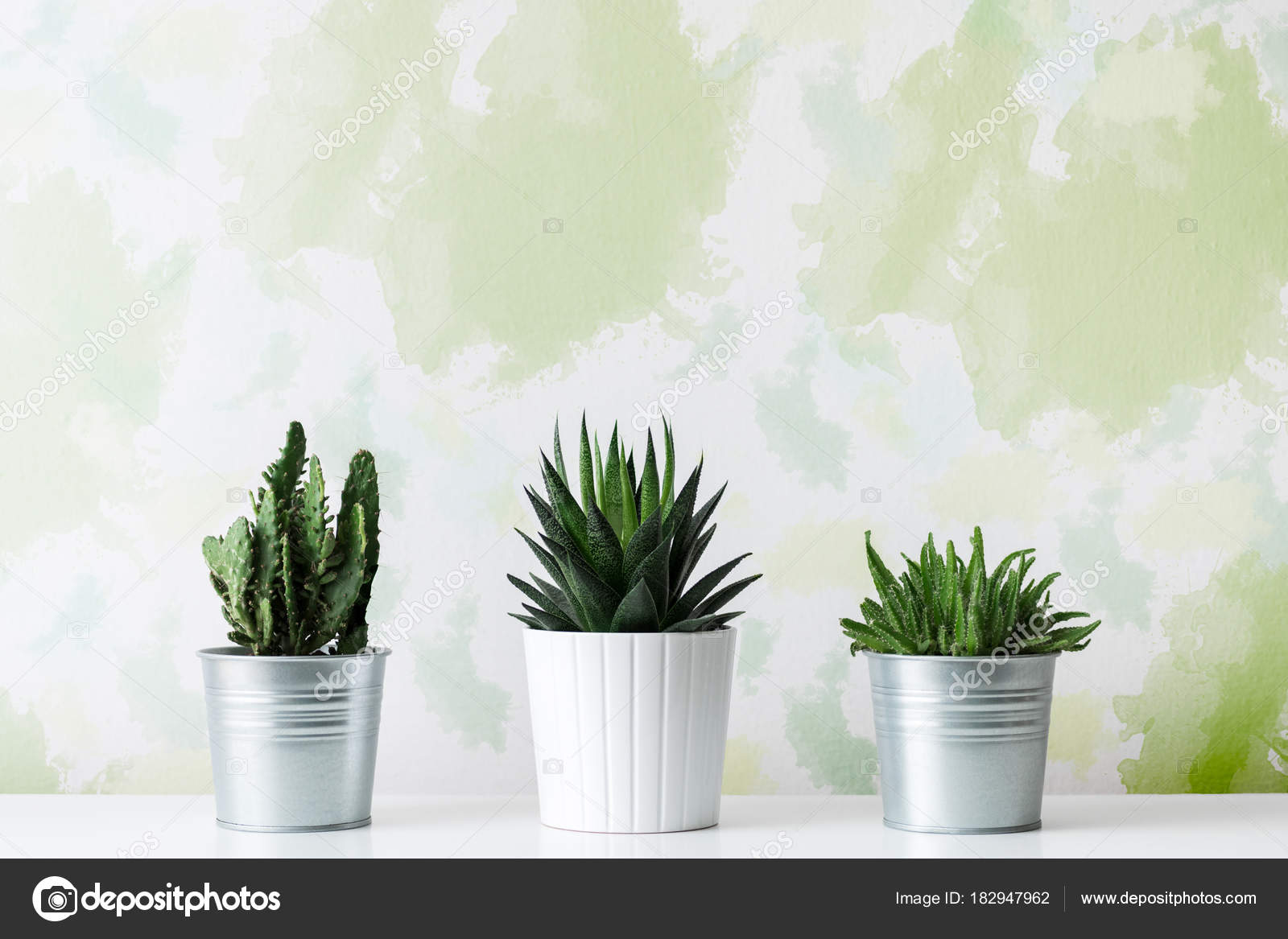 Collection Of Various Cactus And Succulent Plants In Different Pots. Potted  Cactus House Plants On White Shelf Against Unusual Design Wall.