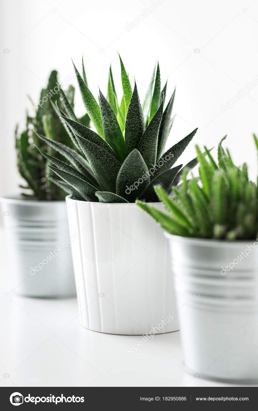 divers cactus plantes grasses pots différents bouchent décoration