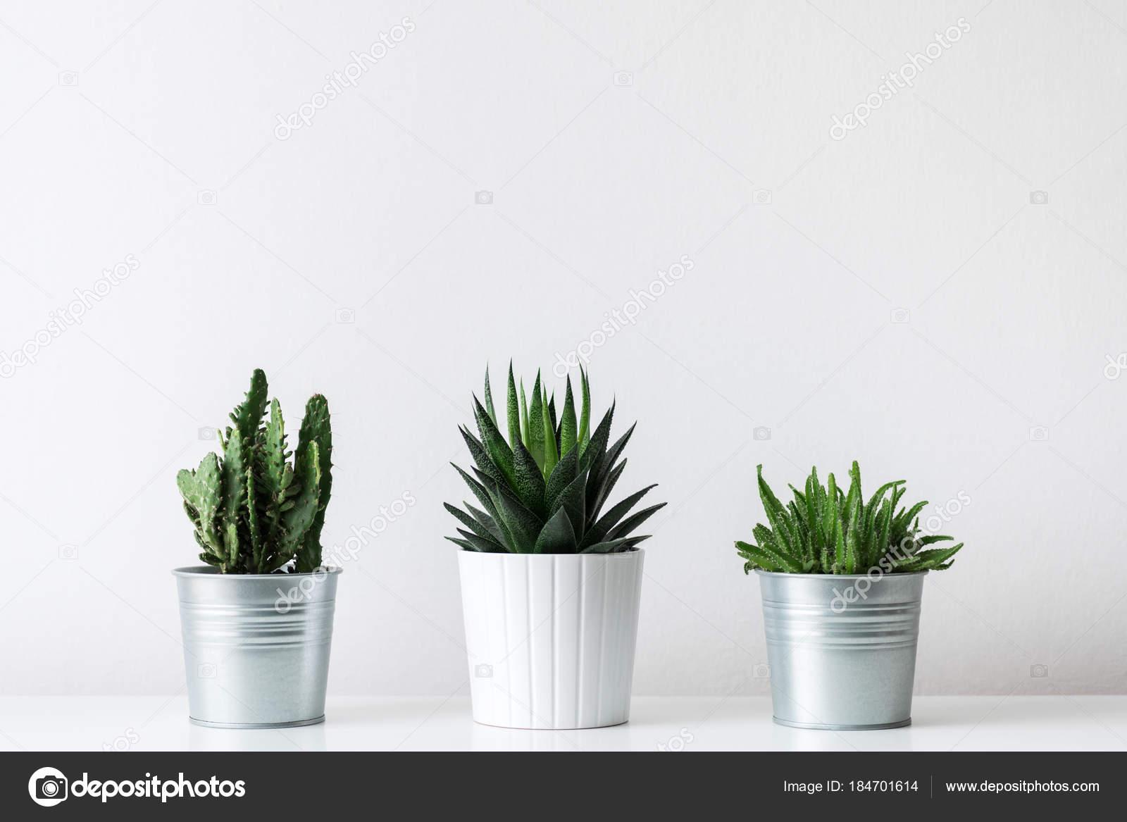 Raccolta varie piante cactus succulente pentole diverse piante
