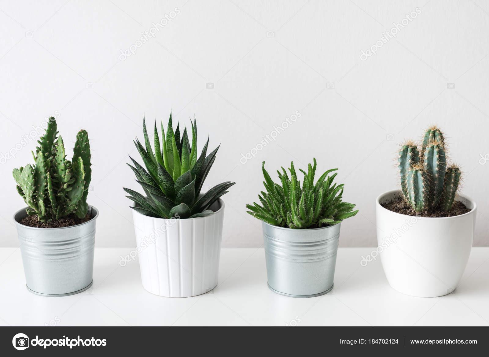 cactus de maison ventana blog. Black Bedroom Furniture Sets. Home Design Ideas