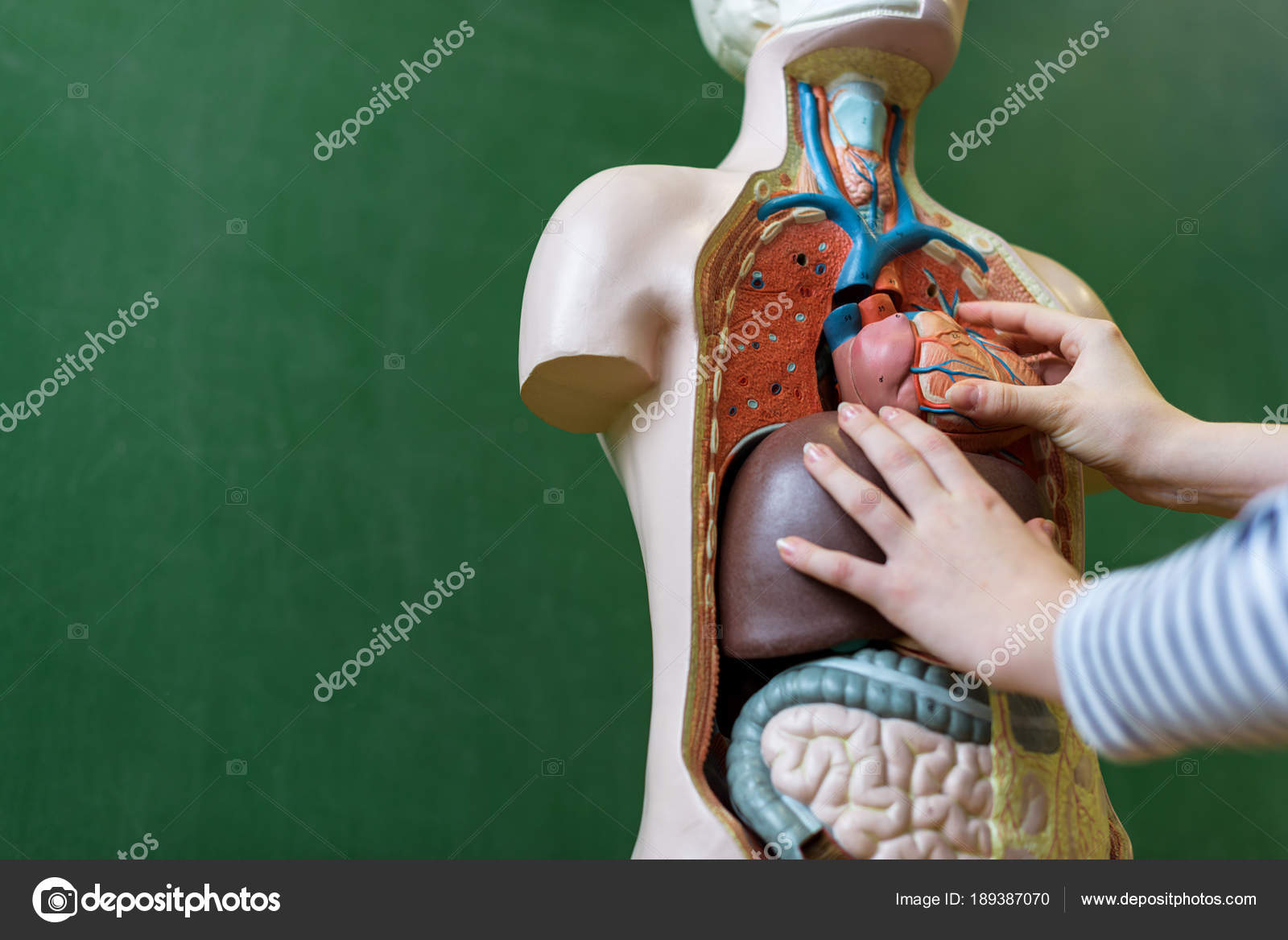 Cerca Estudiante Secundaria Aprender Anatomía Clase Biología Poner ...