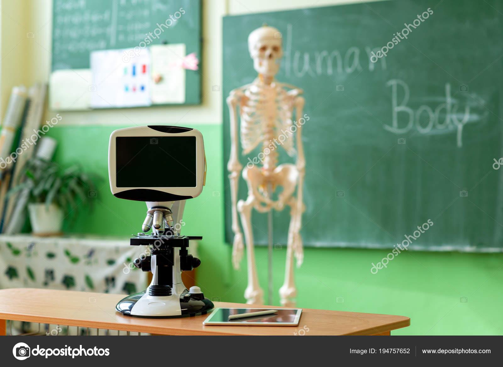 Biologie Unterricht Künstliche Menschliche Körper Skelett Schüler ...