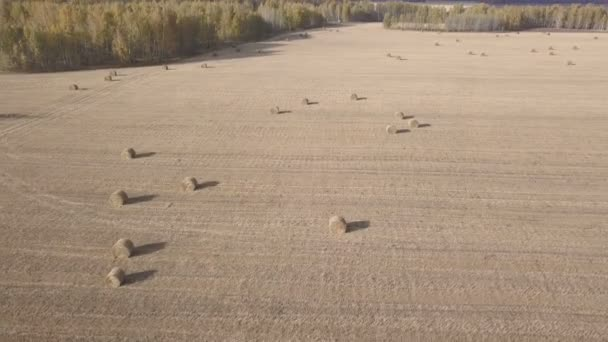 Haystacks szalma, a búza betakarítás után a mezőben. Őszi mezőgazdasági táj a Szénaboglyák. Légifelvételek