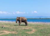 Photo Close up of two elephant eating in a Udawalawe National Park of Sri Lanka