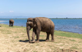 Photo Close up of two elephants eating in a Udawalawe National Park of Sri Lanka