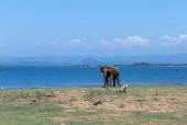 Photo An elephant in a Udawalawe National Park of Sri Lanka