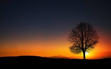 silhouette of tree  on field