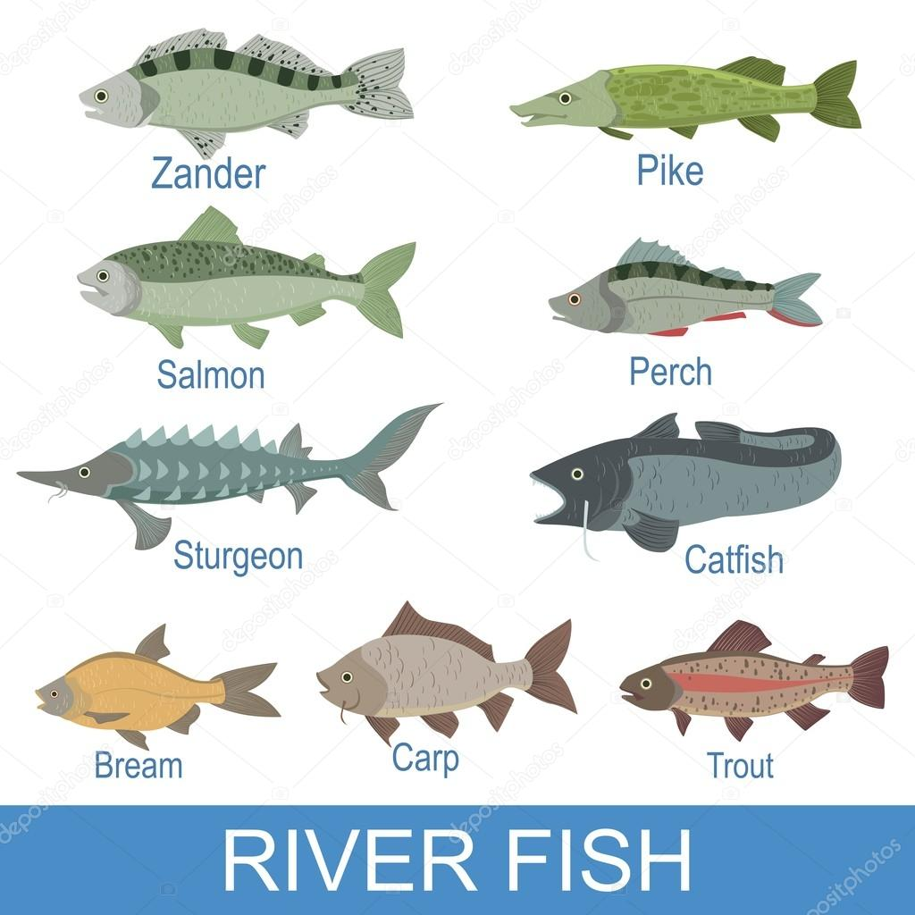 River Fish Identification Slate With Names