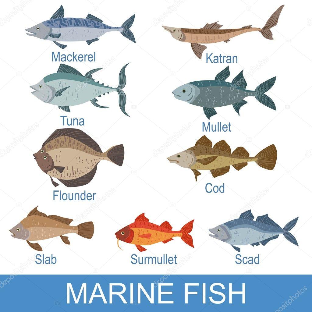 Marine Fish Identification Slate With Names