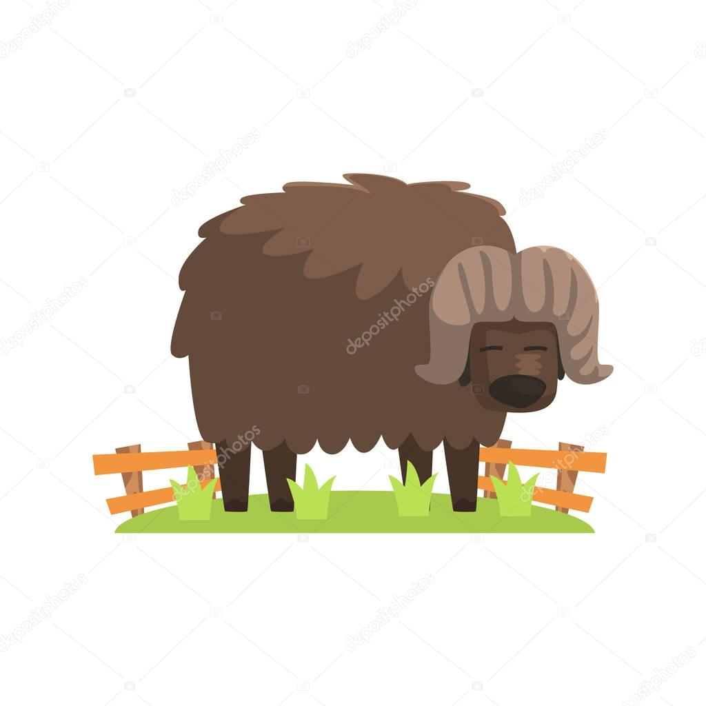 Musk Ox With Scruffy Brown Coat Standing On Green Grass Patch In Open Air Zoo Enclosure