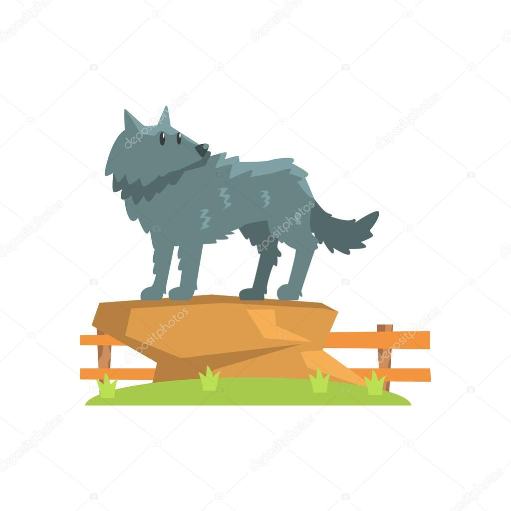 Grey Wolf Standing On Large Rock On Green Grass Patch In Open Air Zoo Enclosure