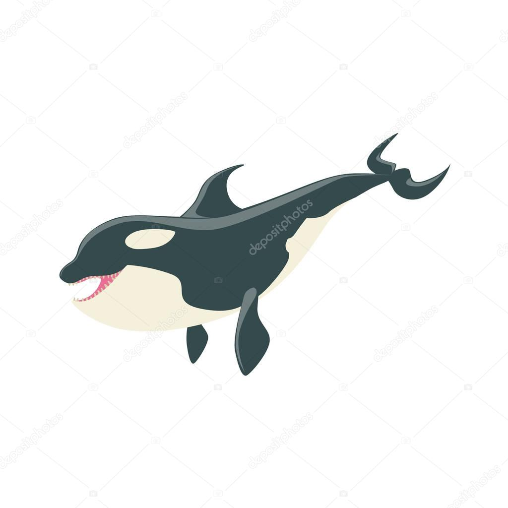 Orca Black And White Arctic Killer Whale Asking For Food, Realistic Aquatic Mammal Vector Drawing