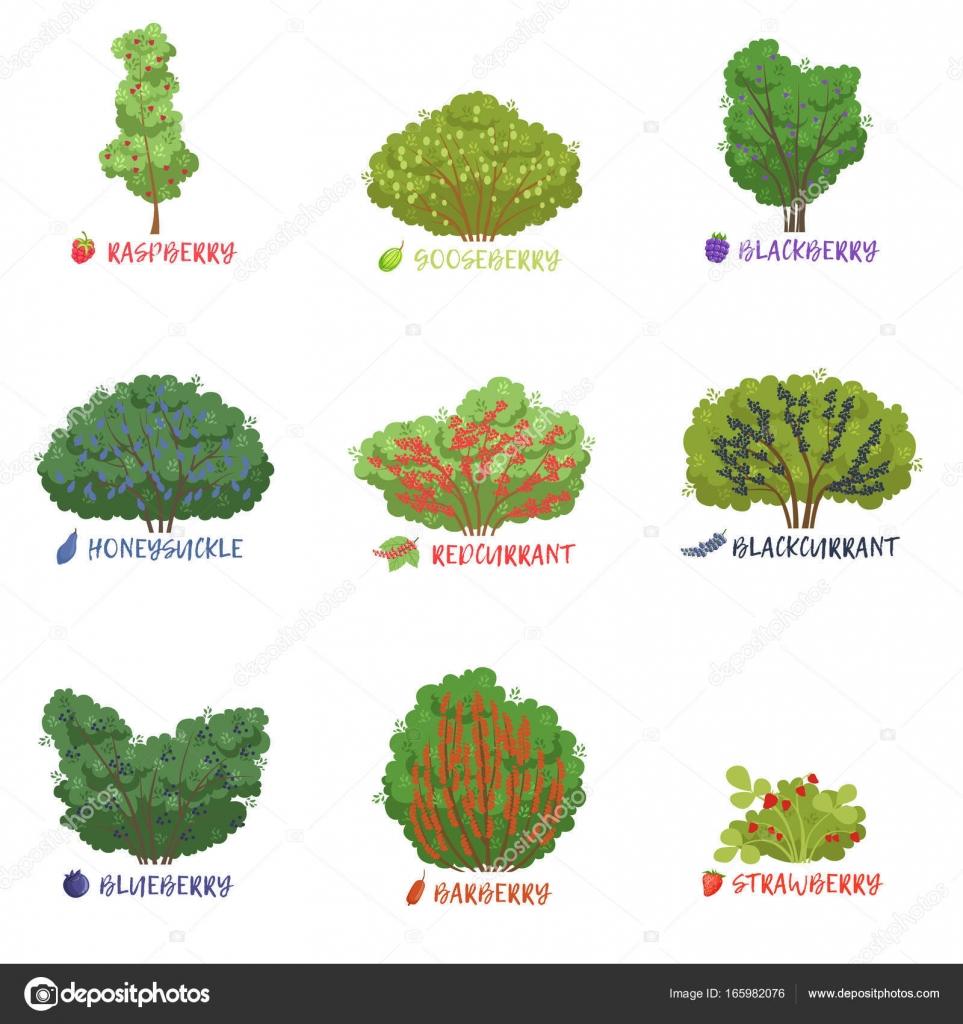 Nomi di garden garden ftempo - Nombres de arbustos ...