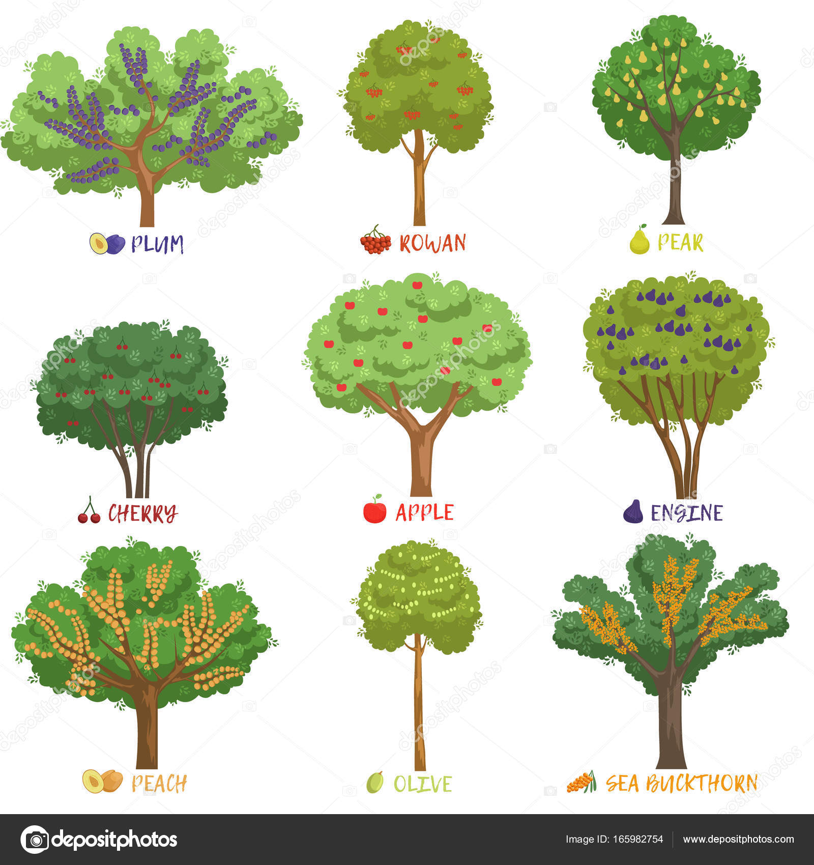 Pictures Fruit Trees With Names Different Fruit Trees Sorts