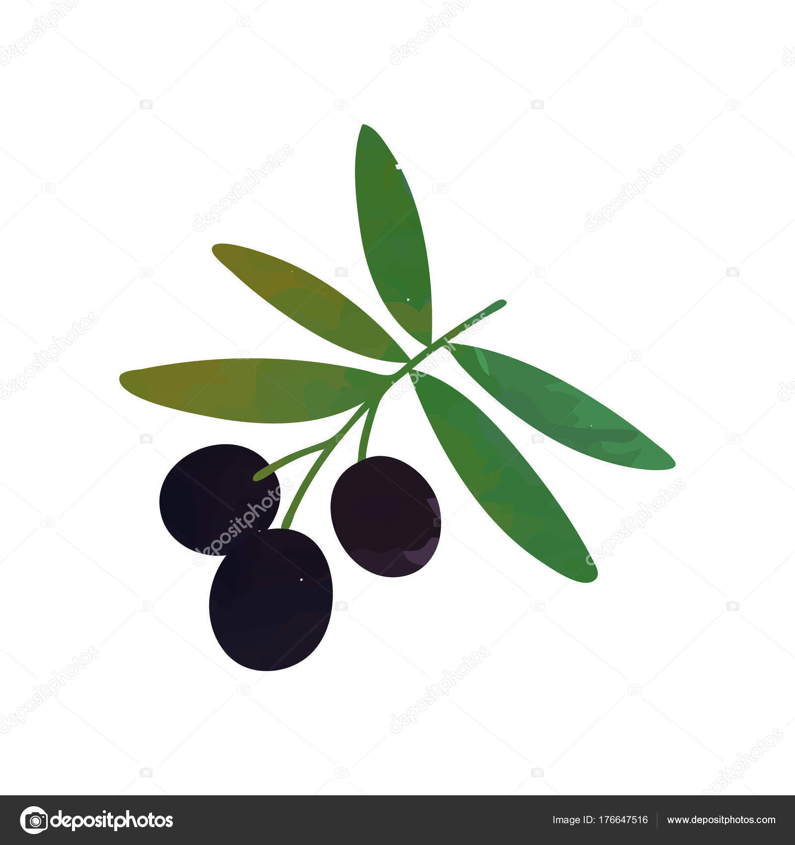 Colored isolated icon of branch with black olives and green leaves ...