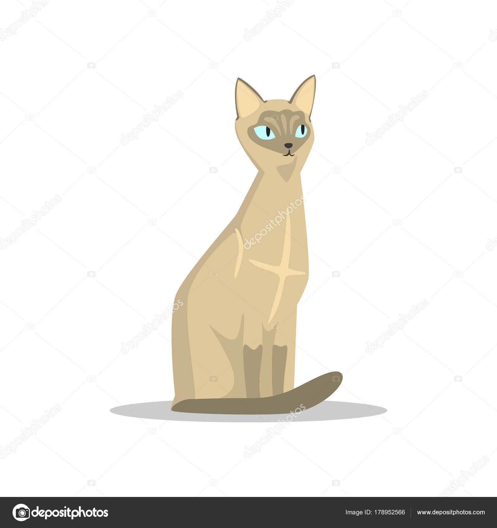 Nomi per gatti come chiamarlo i più belli gatto