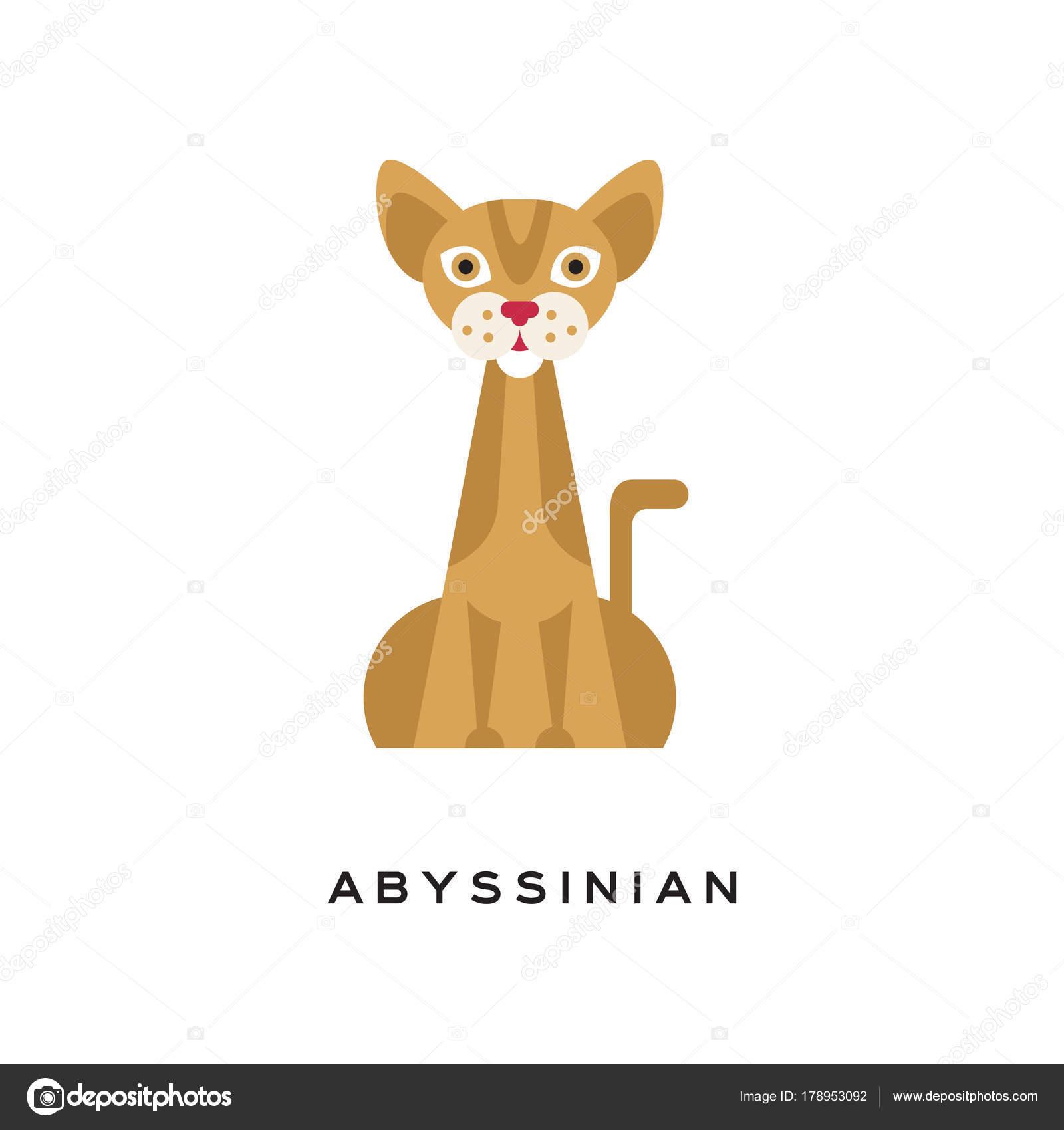 Rasowe Zwierzę Kot Abisyński Eleganckie Kotów Krótkowłosych Z
