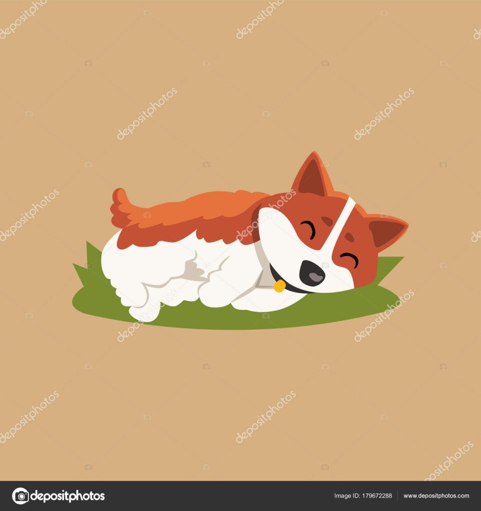Corgi poco divertente dormire sul prato verde. cane del fumetto red