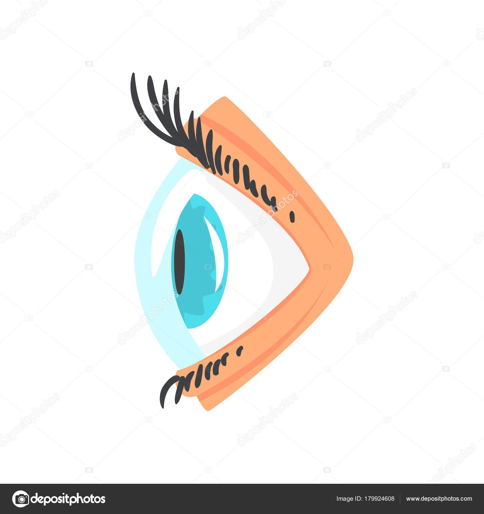 Menschliche Auge mit Kontakt Linse Seite Ansicht Cartoon Vector ...