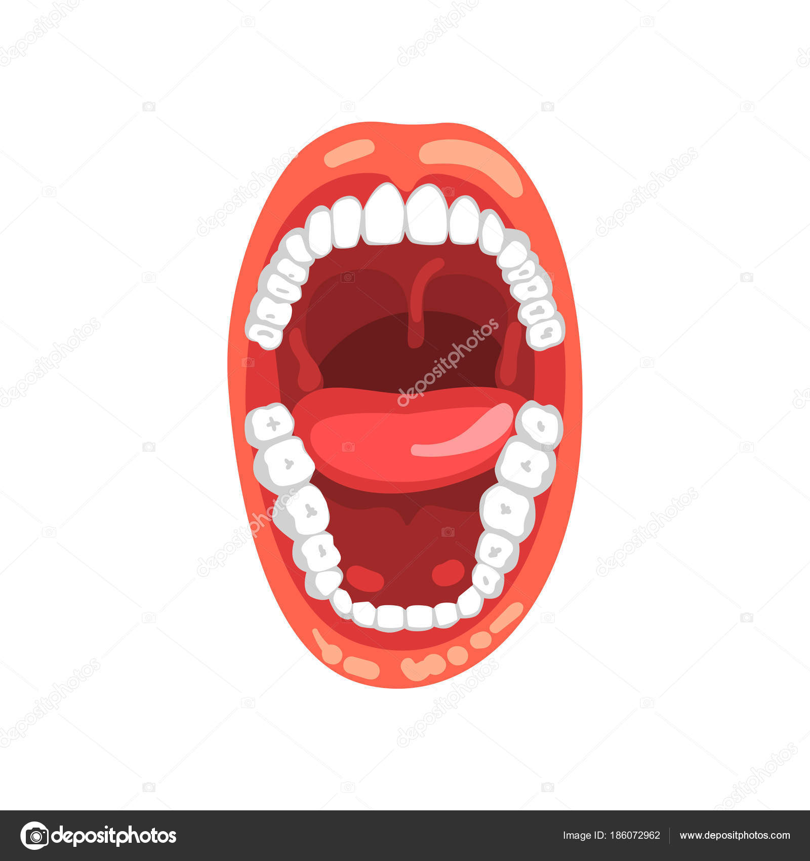 Menschliche Zähne öffnen Mund Vektor Illustration auf weißem ...