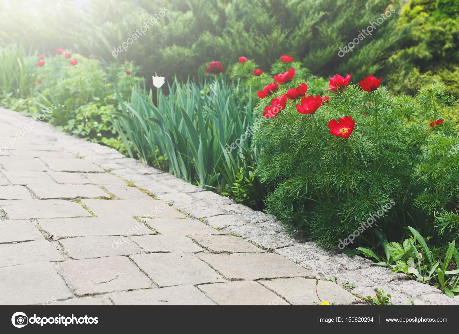 Tulipani nel giardino progettazione del paesaggio u2014 foto stock