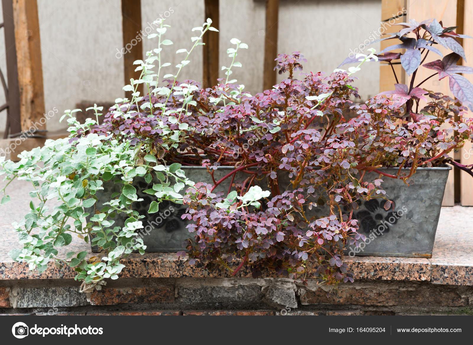 pflanzen im blumentopf — stockfoto © milkos #164095204