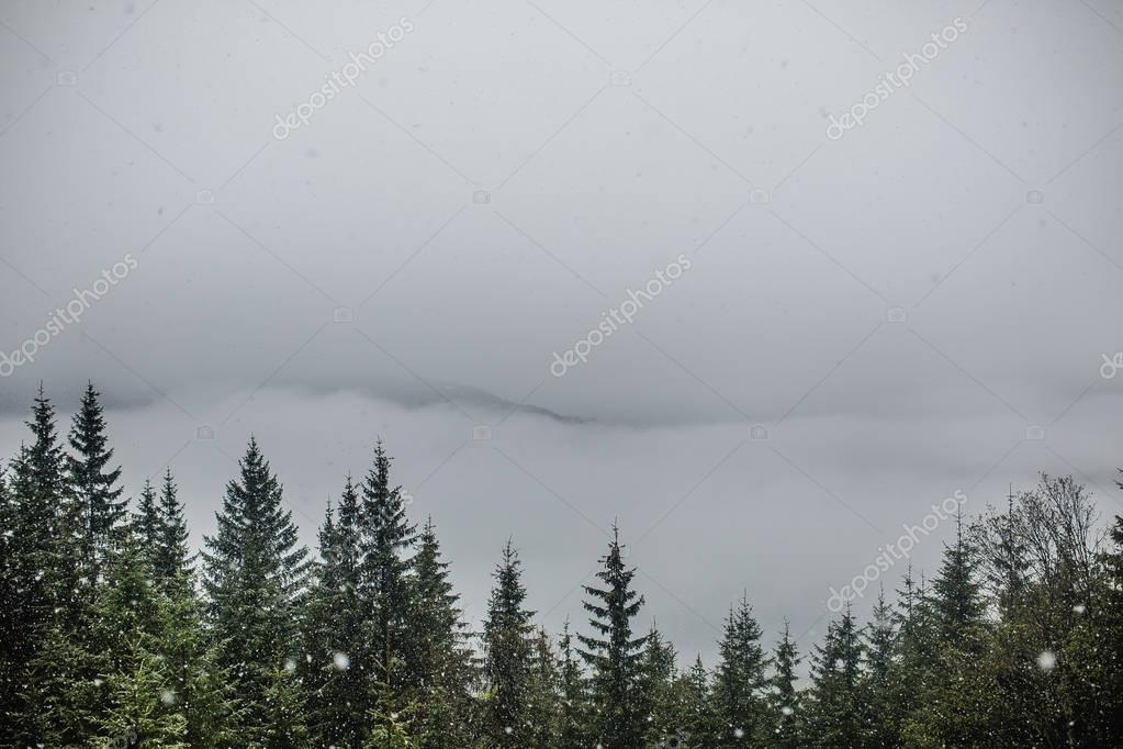 Mountain forest in misty weather