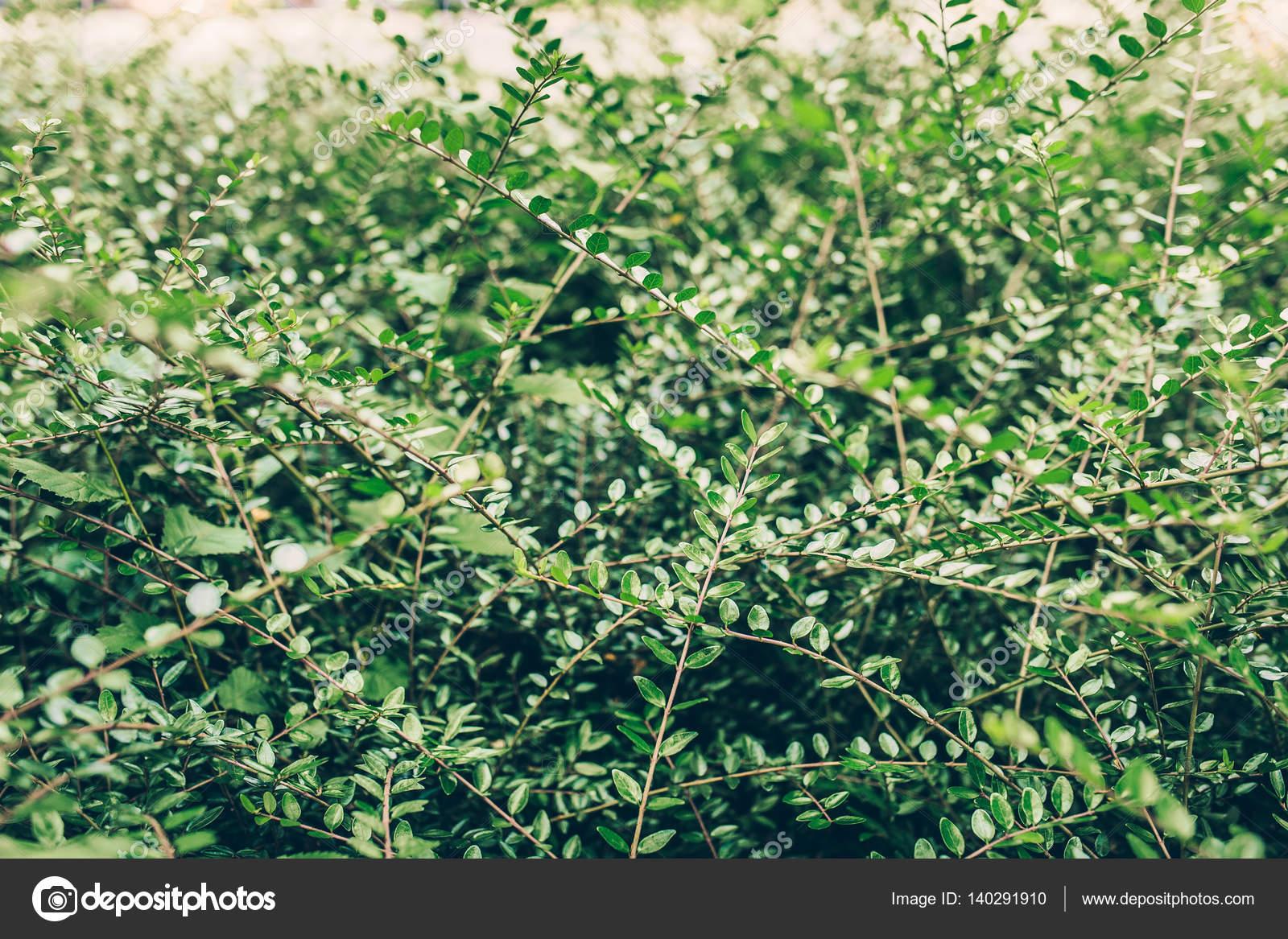 hermosos arbustos silvestres fotos de stock On arbustos salvajes