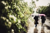 leaves in rainy time with people