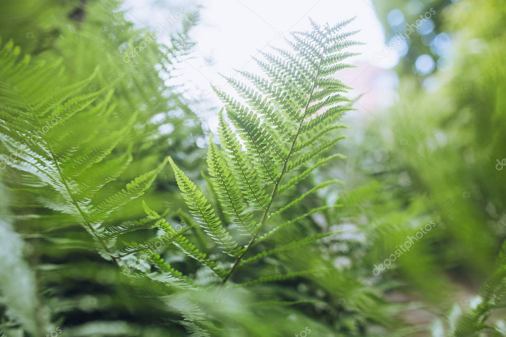 close-up of green leaves of fern