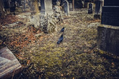 Close-up of two black crows old tombstones at Munich cemetery in Germany stock vector