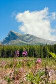 Photo Summertime landscape with Chamaenerion angustifolium (known as fireweed) against the background of mount the Krivan in mountains High Tatras in the Slovakia