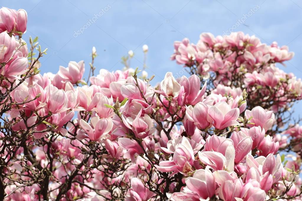 Fondo Primavera: Imágenes: Fondos De Pantalla De Primavera