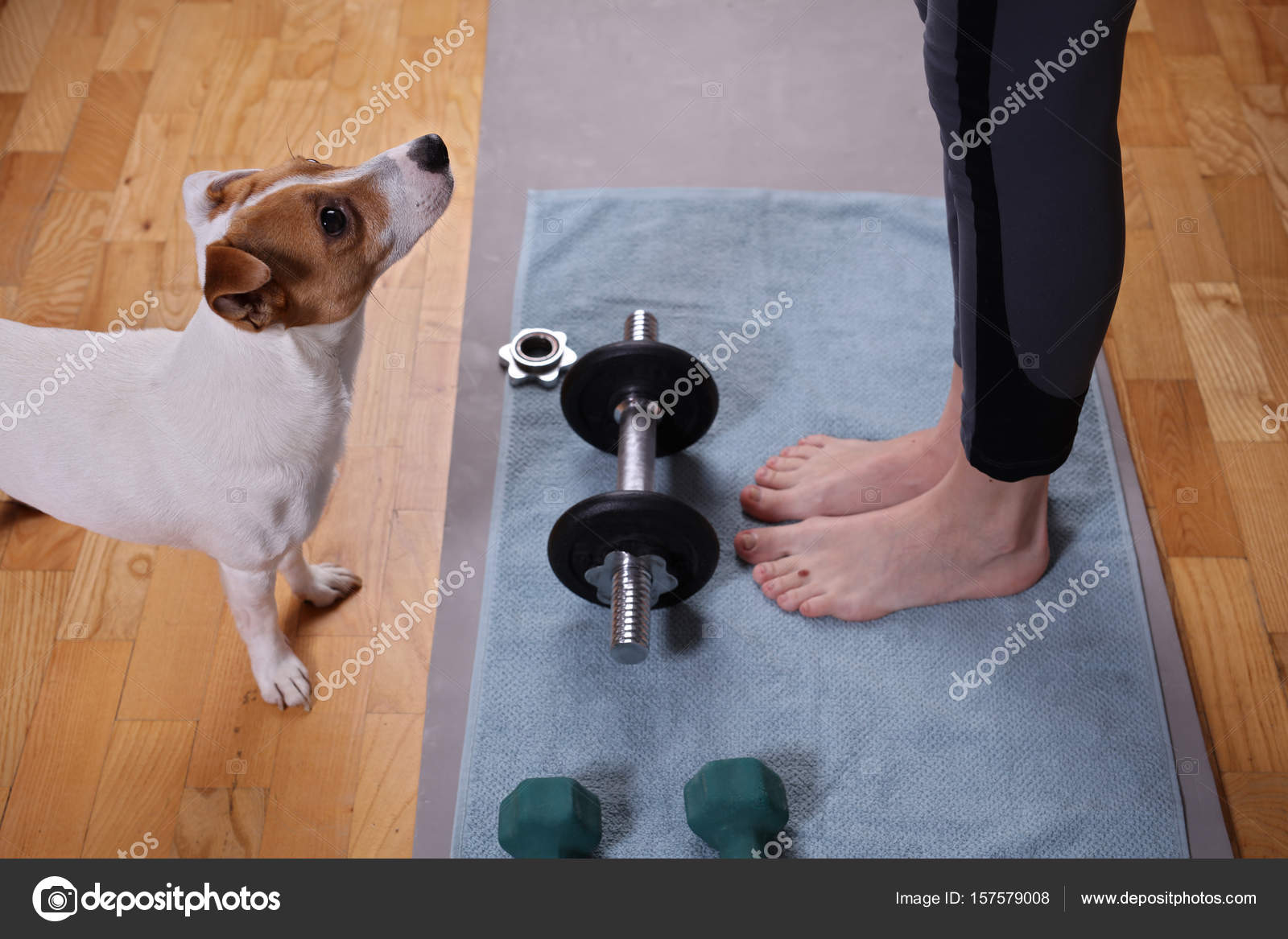 Young woman doing fitness exercises with dog wathing her  Female