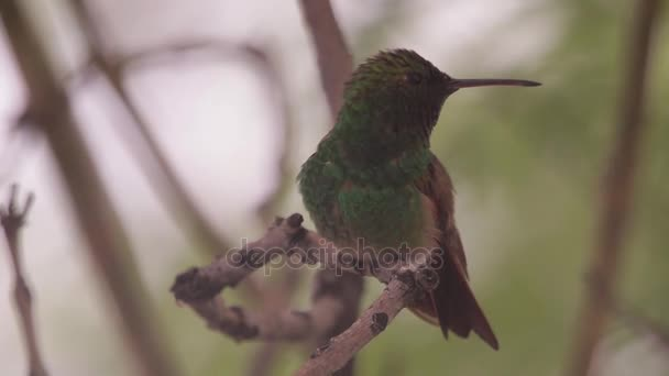 Hummingbird perching on a branch