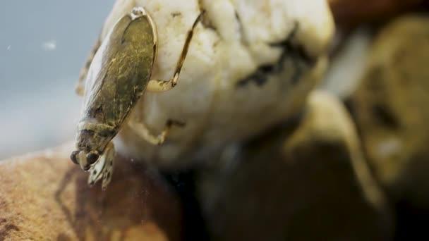 Ferocious water bug head bobbing behaviour