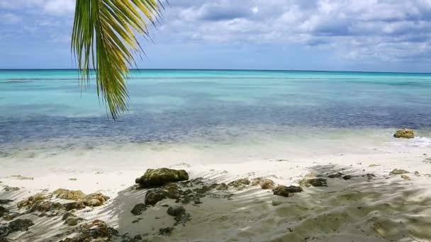 Pálma levelek és a Karib-tenger .