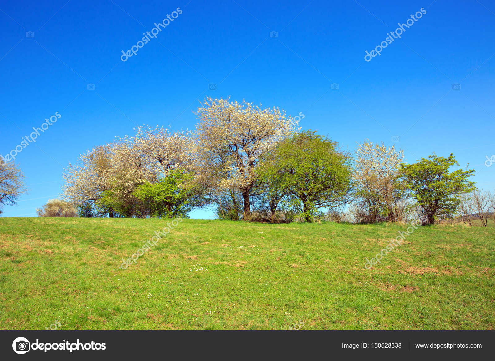 Flowering trees on meadow and blue sky stock photo swkunst spring field of grass and flowering trees with blue sky photo by swkunst izmirmasajfo