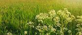 Květy a zelené trávy.
