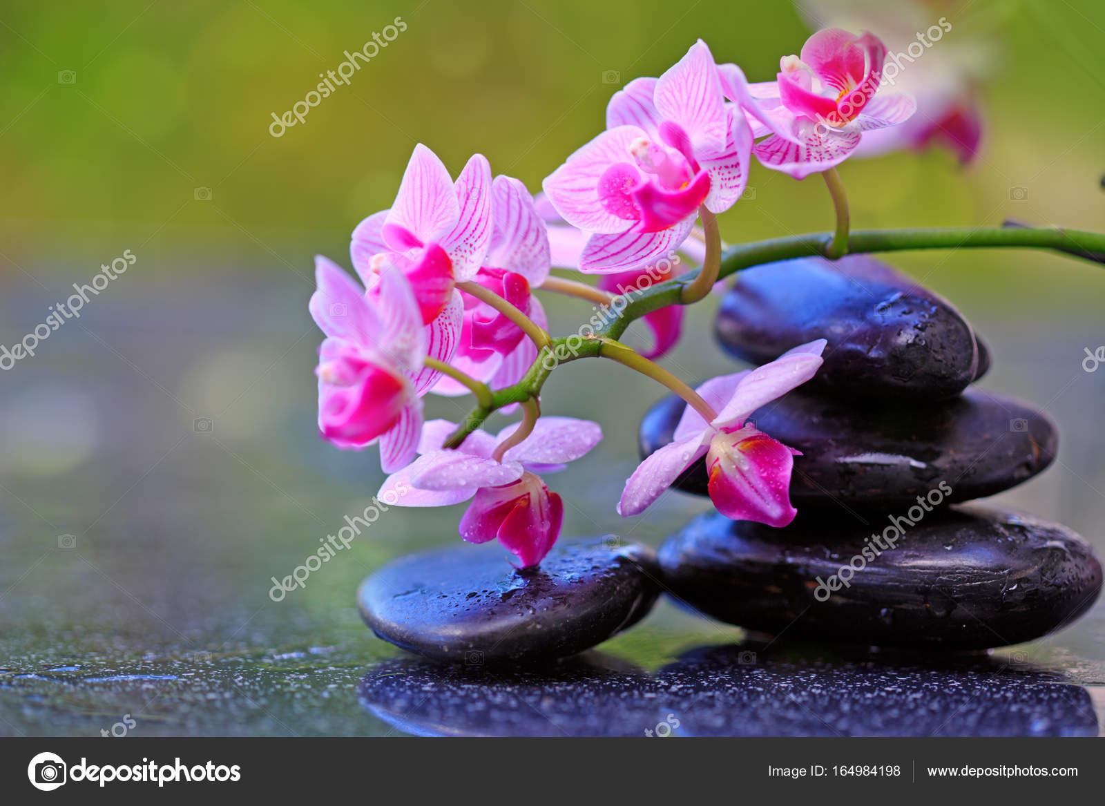Piedras Negras Spa Y Flores Orquideas Rosadas Fotos De Stock