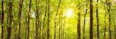 podzimní Les s Sluneční paprsek.