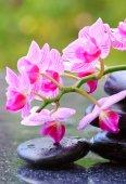 Pietre della stazione termale nera e rosa orchidea