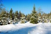 paesaggio invernale con neve coperto di alberi